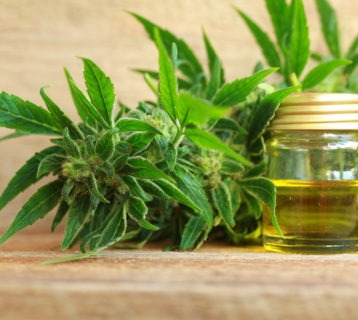 Get the Truth About CBD: 7 Little Known Facts About