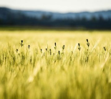 Importance of Crop Protection Products in India